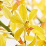 Orchid Bunch Art Print