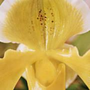 Orchid Flower Art Print