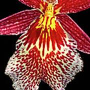 Orchid Hybrid Art Print