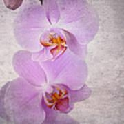 Orchid Art Print by Jane Rix