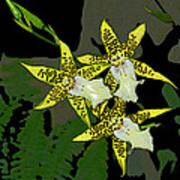 Orchid Trilogy Art Print