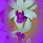 Orchid Vignette Art Print