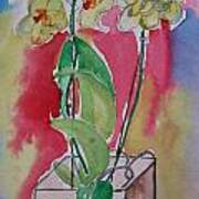 Orchida Art Print