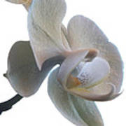 Orchids 1 Art Print by Mike McGlothlen