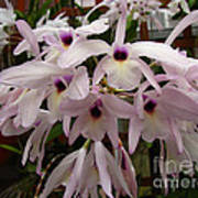 Orchids Beauty Art Print