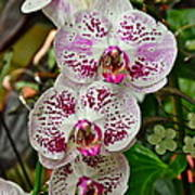 Orchids For You Art Print