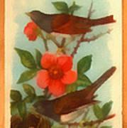 Oregon Snow Bird Trading Card Art Print