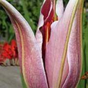 Oriental Lily Named La Mancha Art Print