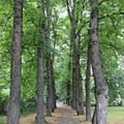 Oslo Trees Art Print