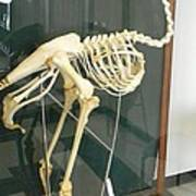 Ostrich Skeleton Art Print