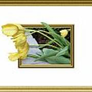 Out Of Frame Yellow Tulips Art Print