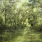 Outback Bush Art Print