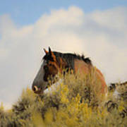 Over The Hill Pinto Art Print