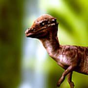 Pachyosaurus Dinosaur Art Print
