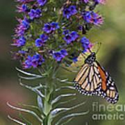 Pacific Grove Monarch Art Print