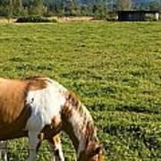 Paint Horse And Mount Rainier Art Print by Stacey Lynn Payne