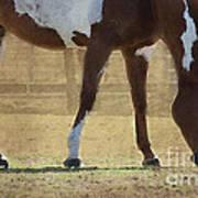 Paint Horse Art Print by Betty LaRue
