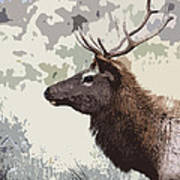 Painted Bull Elk Art Print