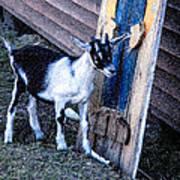 Painted Goat Art Print