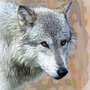 Painted Grey Wolf Art Print
