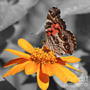 Painted Lady Butterfly On Zinnia Art Print