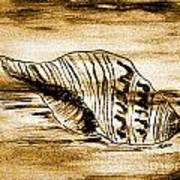 Painted Seashell Art Print by Marsha Heiken