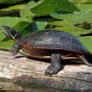 Painted Turtle On Log Art Print