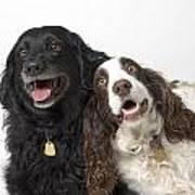 Pair Of Canine Friends Art Print