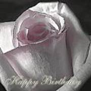 Pale Pink Rose Greeting Card.   Birthday Art Print