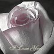 Pale Pink Rose Greeting Card   I Love You Art Print