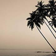 Palm Dreams Art Print