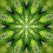 Palm Kaleidoscope 11 Art Print