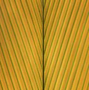 Palm Leaf Showing Midrib And Veination Art Print