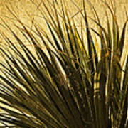 Palm Leaves 1 Art Print