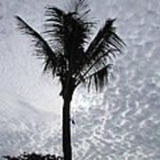 Palm Shadow Art Print