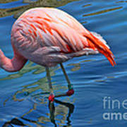 Palm Springs Flamingo Art Print