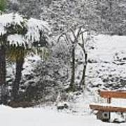 Palm Tree And A Bench With Snow Art Print