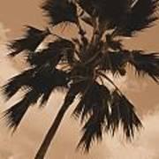 Palm Tree Leeward Oahu Art Print