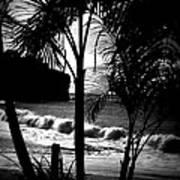 Palm Tree Silouette Art Print