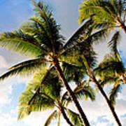 Palm Trees At Twilight Art Print