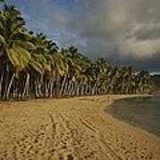 Palm Trees Line A Dominican Republic Art Print by Raul Touzon