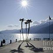 Palm Trees With Shadows On The Lakefront Art Print