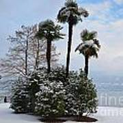 Palm Trees With Snow Art Print