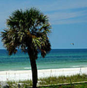 Palmetto And The Beach Print by Susanne Van Hulst