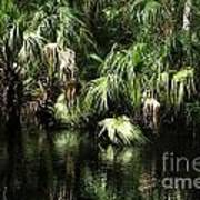 Palmettoes In The River Art Print