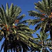 Palms 9838b Art Print