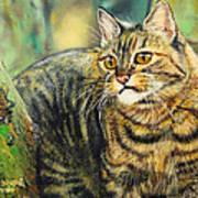 Palo Verde Kitty Art Print
