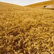 Palouse Wheat Art Print