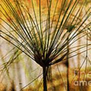 Pampas Grass Art Print