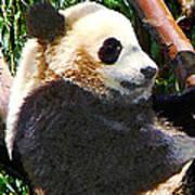 Panda In Tree Art Print